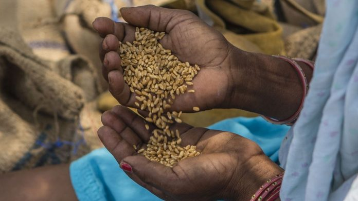 File image of food grains | Photo: Bloomberg