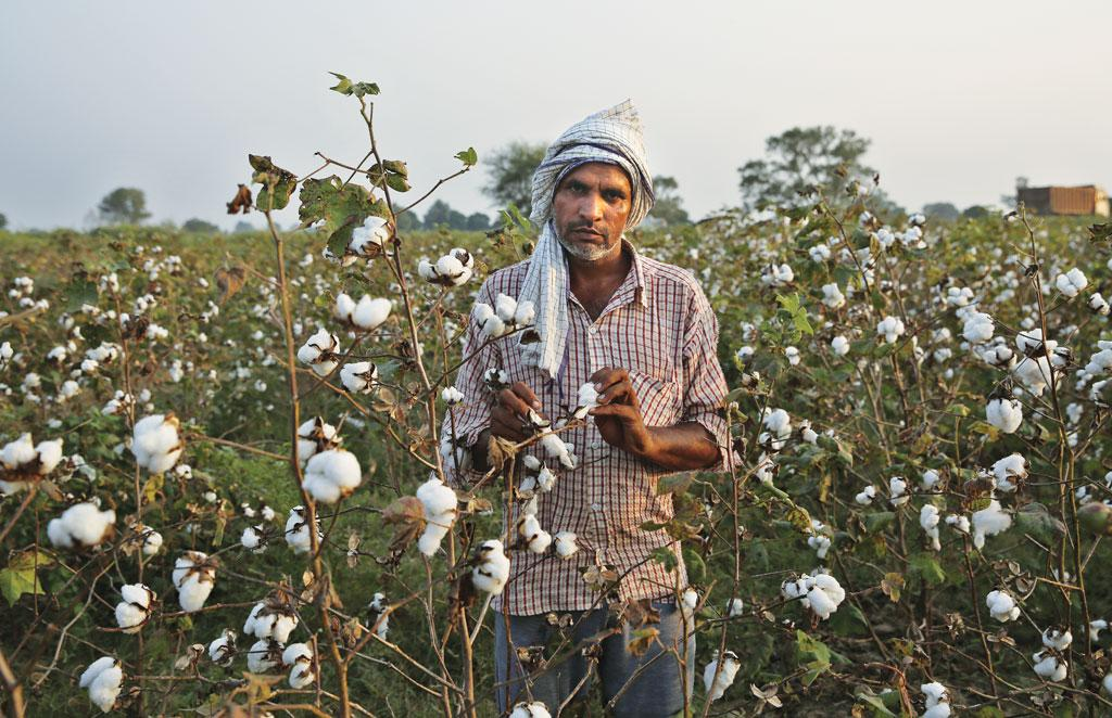 Centre buys record high cotton, rice from Punjab at MSP amidst protests