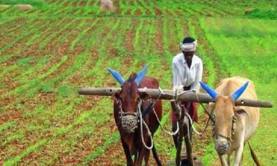 Farmers will get 36000 rupees a year without spending money, know this new scheme of Modi government