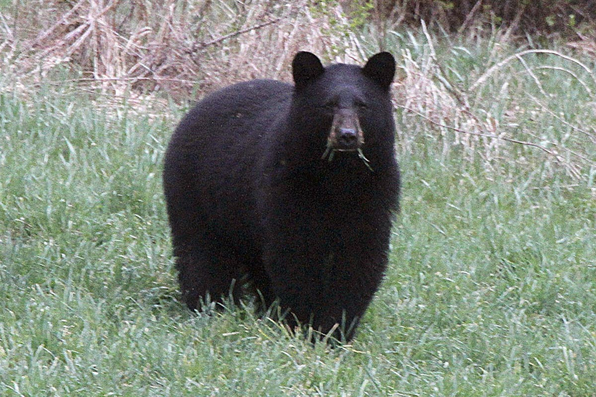 Woman attacked by bear while sitting on toilet in Alaska