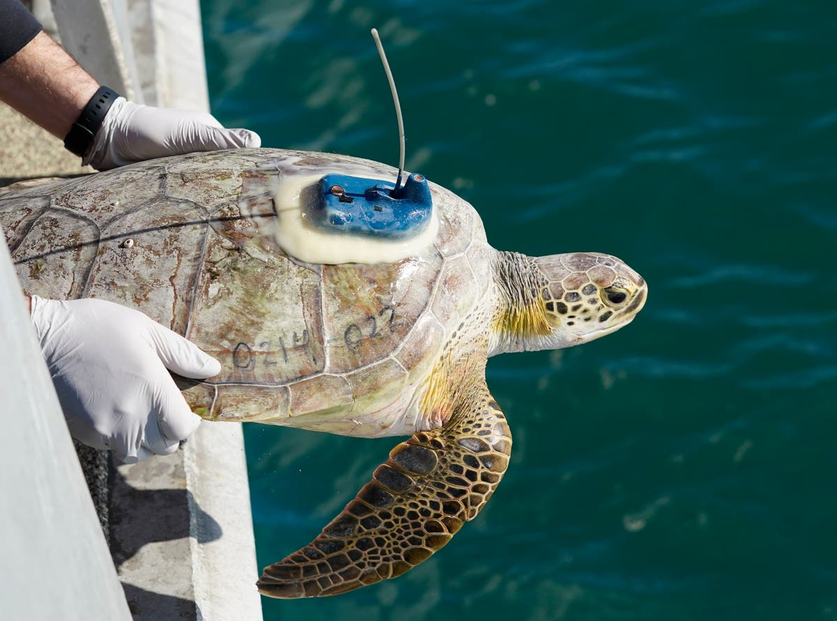 Thousands of turtles returned to sea after Texas rescue mission