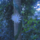 The Moonflower cactus blooming