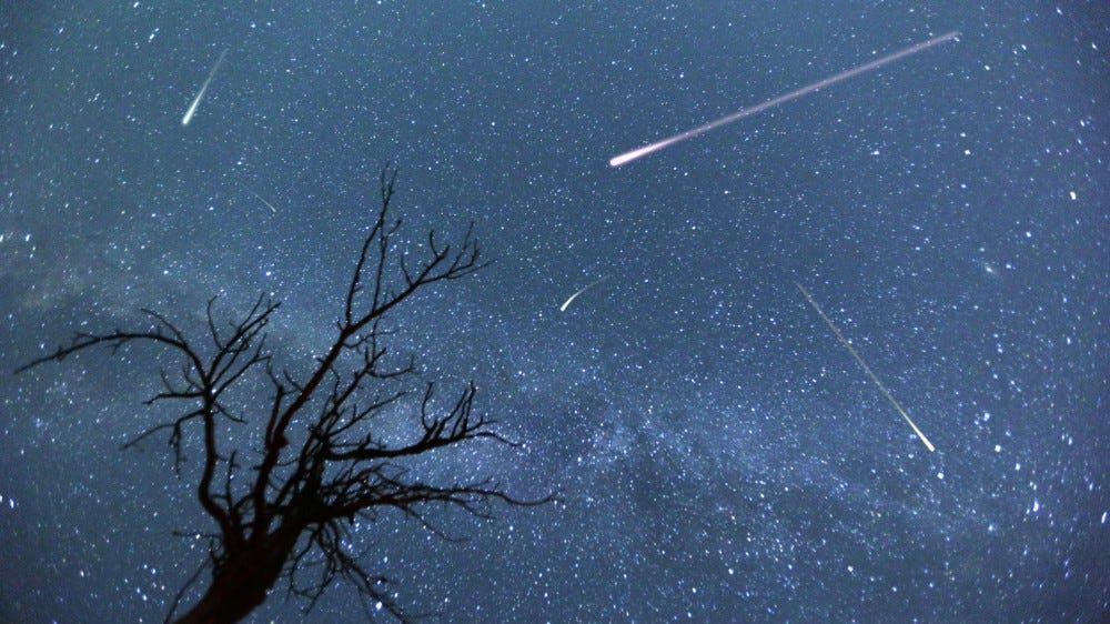 Composite image of shooting stars with a silhouette of a small tree during the 2015 Perseid meteor shower