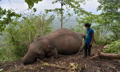 18 elephants found dead in Indian forest reserve