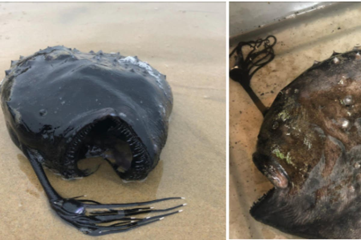 Monstrous looking fish found miles away from home on California beach
