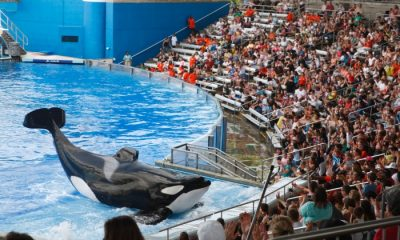 Your Co-op Travel latest to stop selling SeaWorld tickets