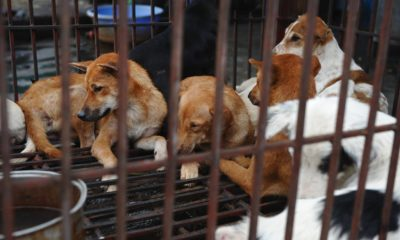 South Korea's president to consider dog meat ban